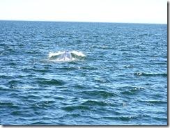 whalewatch 133