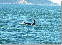 whalewatch_